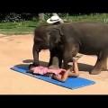 Dịch vụ massage bằng voi