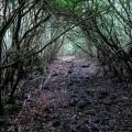 Giải mã bí ẩn lạnh gáy trong khu rừng tự sát (0)