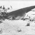 8 sự kiện UFO rúng động nhất trong lịch sử thế giới (0)