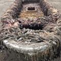Con tàu bí ẩn trôi vào bờ biển bang Washington