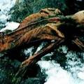 Xác ướp Otzi được bảo quản nguyên vẹn trong băng