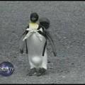 Chim cánh cụt đi chợ