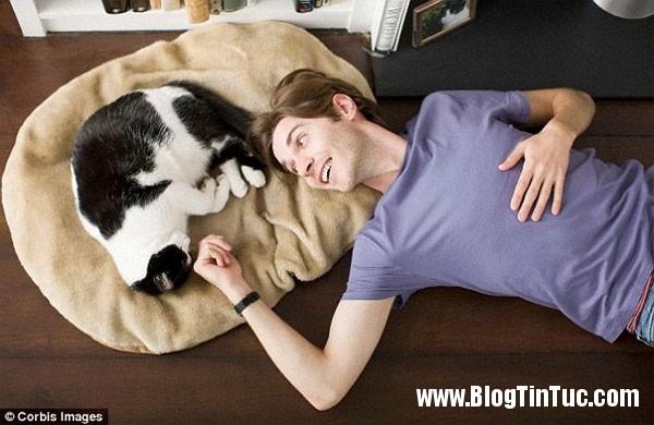 loai meo1 Những điều thú vị chưa ai biết về loài mèo