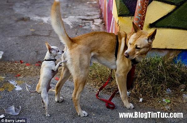 ngui mong dong loai Khám phá bí mật hành vi ngửi mông đồng loại kỳ quặc ở loài chó