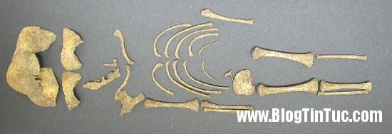 xuongnguoi Bí ẩn được tiết lộ đằng sau 35 bộ xương trẻ sơ sinh