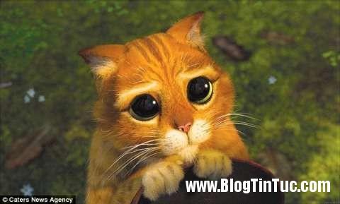 32oJgT2GSmIIApY Chú mèo biết dùng ánh mắt đầy thương hại để nịnh chủ