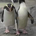 penguin-91214-5c9e7