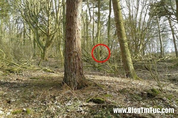 sinh vat bi an 1 Sinh vật bí hiểm giống dã nhân ẩn hiện trong rừng ở Anh
