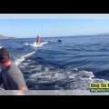 Lướt sóng cùng cá heo
