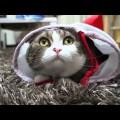 I am Maru – con mèo cute nhất hành tinh !!!