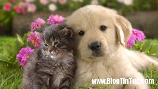 20150726 041335 cong nhan cho meo 2606122509 520x292 Tây Ban Nha công nhận chó mèo là công dân hợp pháp