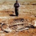 Archeology-Hoax-size-0x0-znd