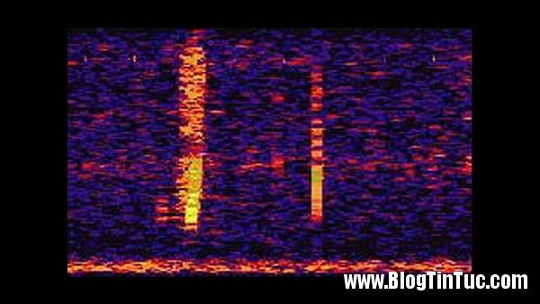 am thanh 1 Âm thanh bí ẩn dưới đại dương
